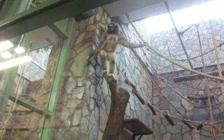 Самый большой зоопарк в спб у метро горьковская, цена от 500 рублей