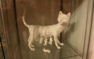 Республика и музей кошек в санкт-петербурге и всеволжске
