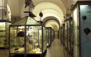 Зоологический музей российской академии наук в санкт-петербурге