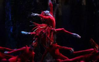 Балет «пламя парижа» в михайловском театре