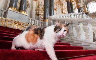Чем занимаются эрмитажные коты в будни и праздники