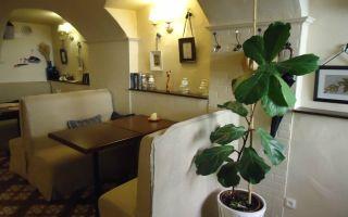 «прекрасная зеленая» – кафе спб с вегетарианской кухней