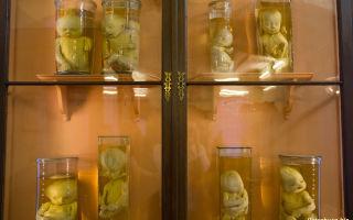 Музей кунсткамера в санкт-петербурге: фото, режим работы, адрес