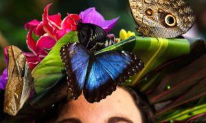 Сады живых бабочек в санкт-петербурге: адреса и цены