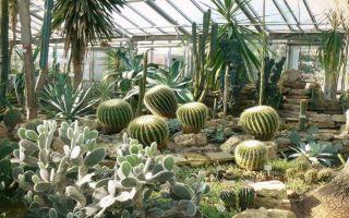 Ботанический сад в санкт-петербурге: фото, часы работы, цены