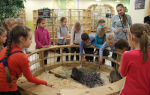 Контактный зоопарк в спб: уникальный мир животных
