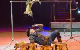 Фестиваль циркового искусства 2019 в санкт-петербурге