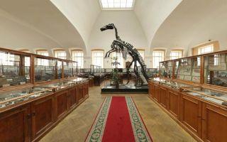 Геологоразведочный музей спб на васильевском