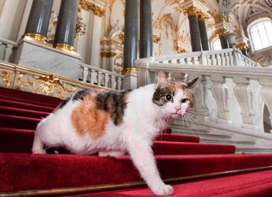 Чем занимаются эрмитажные коты в будни и праздники - Мой Город - Петербург